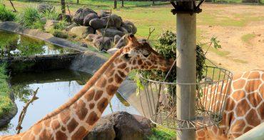 新竹關西 | 六福莊生態度假旅館,在動物園裡住一晚,長頸鹿、狐猴超可愛~