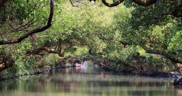 台南景點》四草綠色隧道,絕美台版迷你亞馬遜河,乘竹筏漫遊水上綠色隧道~