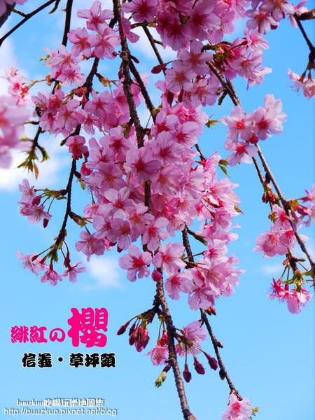 <遊玩地圖> 緋紅の櫻。草坪頭[2013櫻花季期間01/16~02/17車輛管制重點]