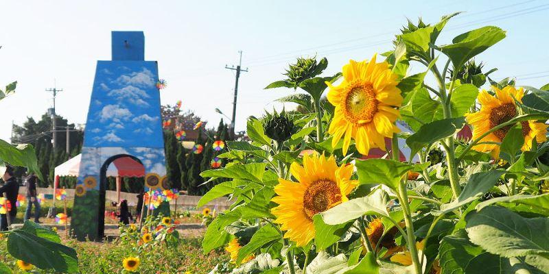 <台中景點> 大雅小麥文化節,現場有整片向日葵花海迷宮,快來捕捉艷陽花開及麥穗搖曳的景色!