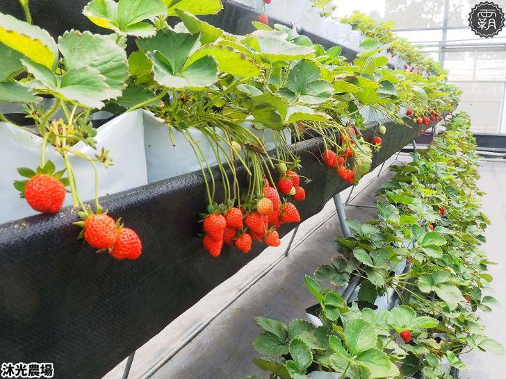 20190405214834 9 - 白草莓、水蜜桃草莓好特別!沐光農場,溫室高架草莓園,採草莓超舒適!
