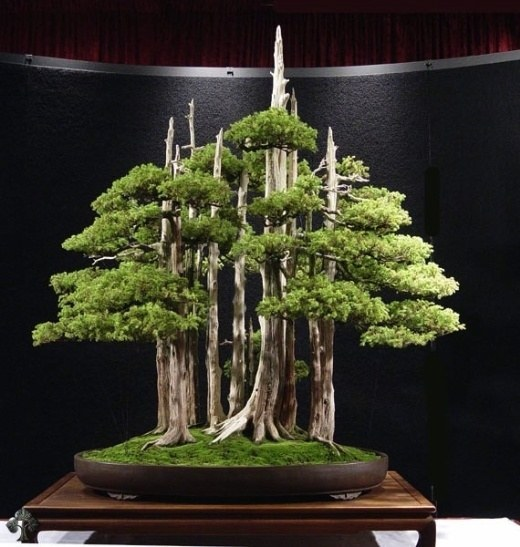 I want to have all the bonsai gardens, don't you?