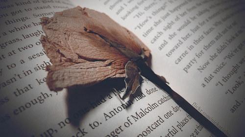 Eres de los que guardan recuerdos importantes dentro de sus hojas.
