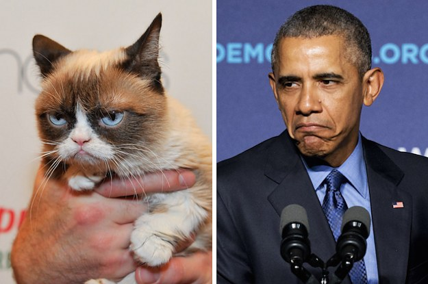 Obama Compared Republicans To Grumpy Cat Whipped Out