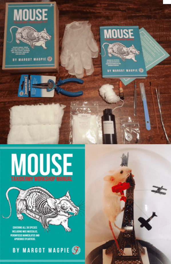 Mouse Taxidermy Kit - $37