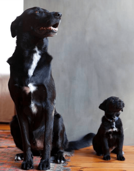 """""""Look out the window, son. Do you see that bird on a roof five houses away? Let's bark at it. For 20 minutes."""""""