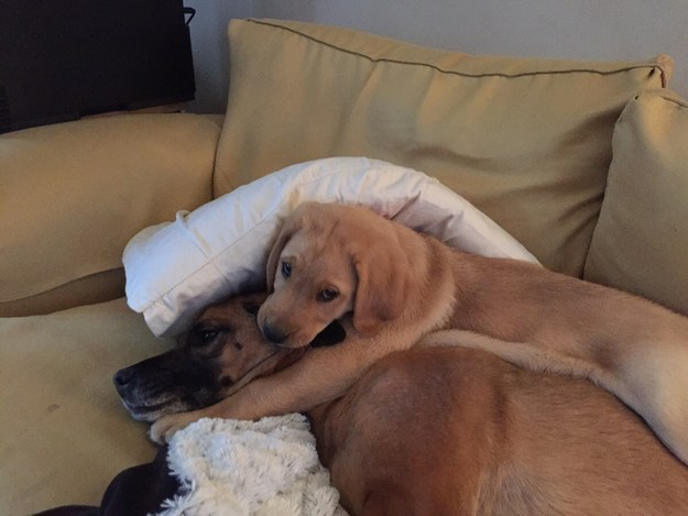 """""""Well it's clear you're not learning about a little thing called personal space at your puppy training school."""""""
