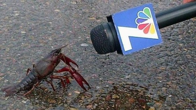 This crawfish.