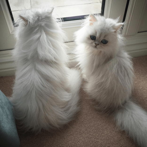 """I don't know, sis, sometimes it just seems like we are TOO fluffy."""