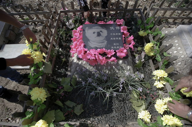 "The Chinese characters on the gravestone read: ""Huoban, we were destined to meet this life, and will see you again next life. We love you forever."""