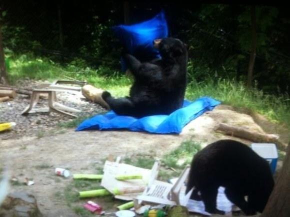Dangerous animal destruction on American campsites: