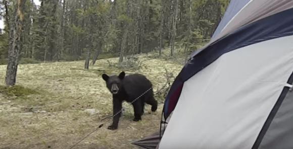 Campsite animal invasions in the US: