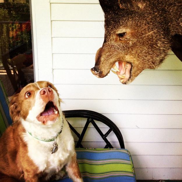 Guard dog: