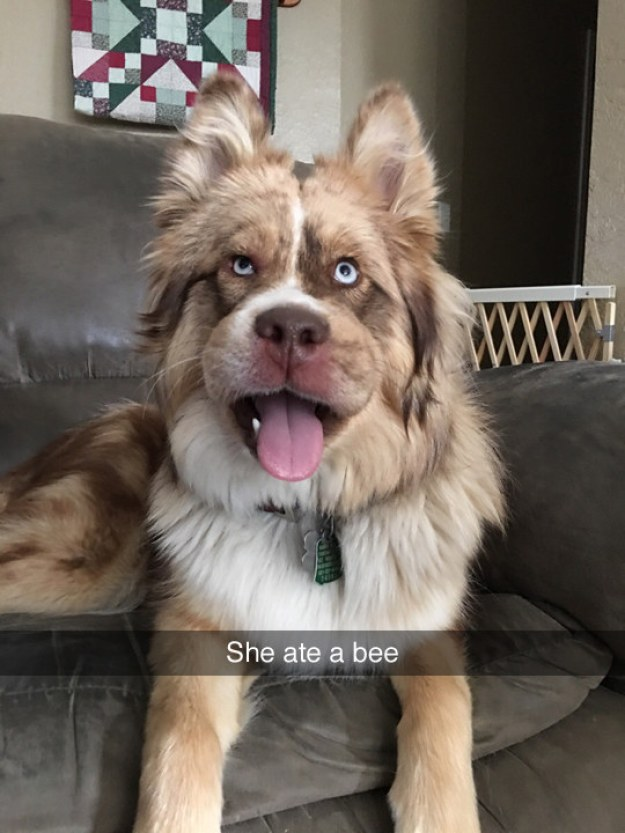 Bee careful: