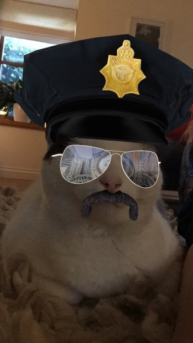 This hard-bitten police captain: