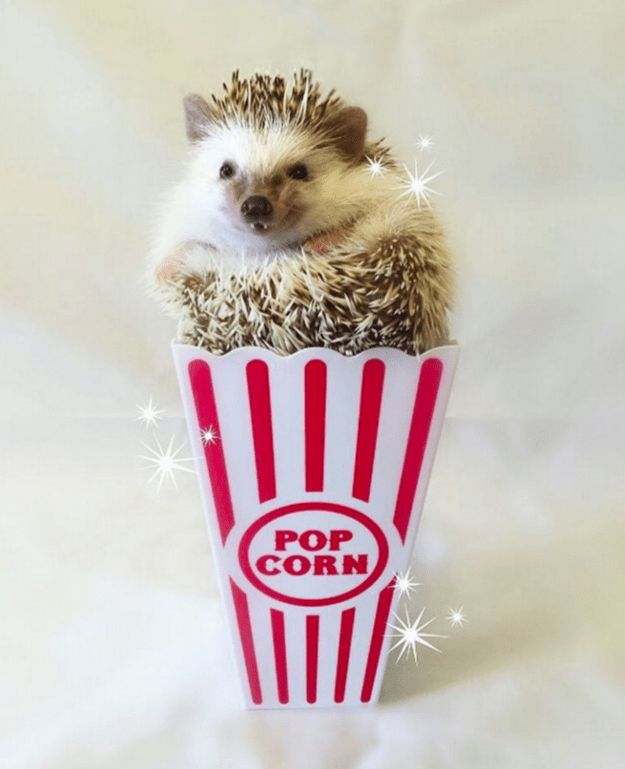 """Parker is not a professional photographer but loves to take photos of her tiny hedgehog. """"I have daydreams of pet photography just because I enjoy taking pictures of Huff,"""" she said."""