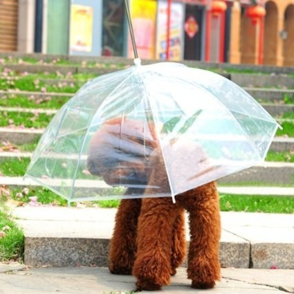 This dog umbrella leash that you'll love using because it will keep your dog dry when you have to take them for a walk.