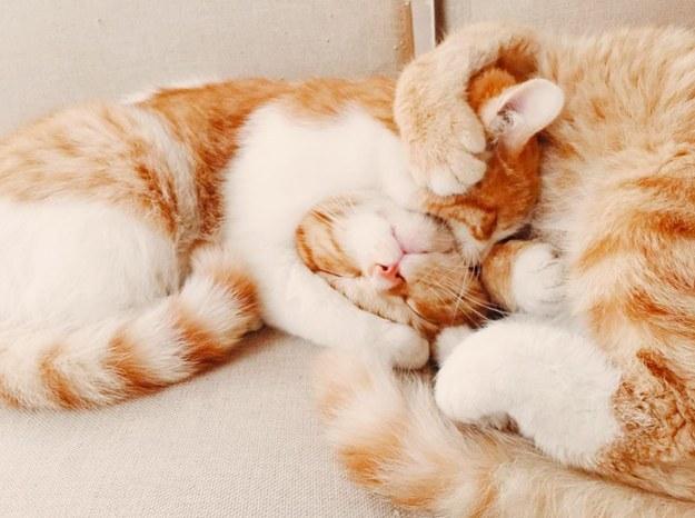Gushing over affectionate kitty head locks: