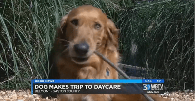 Last week, Riley was riding in a car with his owner, Tonia Mosteller, when they drove past the daycare, Rhodes said. Some of the staffers were walking a bunch of his friends on a leash.