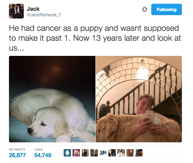 Earlier this week, Jack Richards, an 18-year-old from Essex, England, posted a photo of his pup D'for that went mega viral on Twitter.