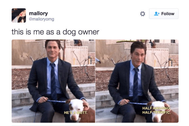 When someone asks you what kind of dog you have: