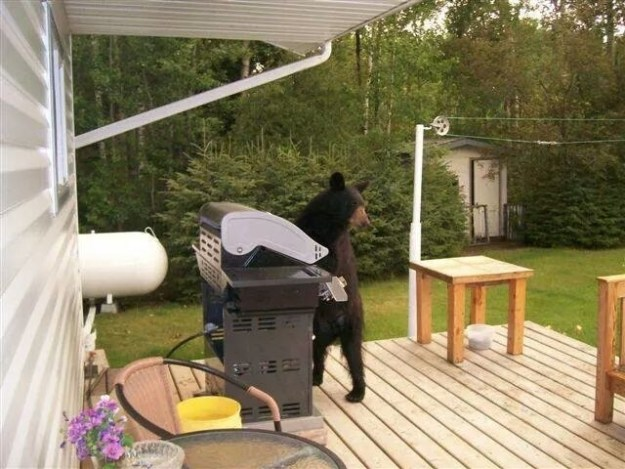This cool bear getting the grill going: