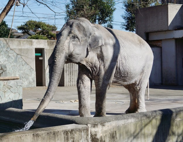 A 69-year-old elephant in Japan, dubbed by animal rights campaigners as the loneliest of her species in the world, died Thursday, zoo officials announced.
