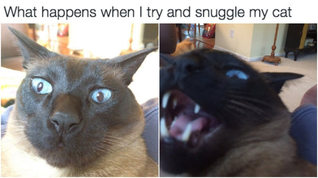 Cats don't want unsolicited snuggles.