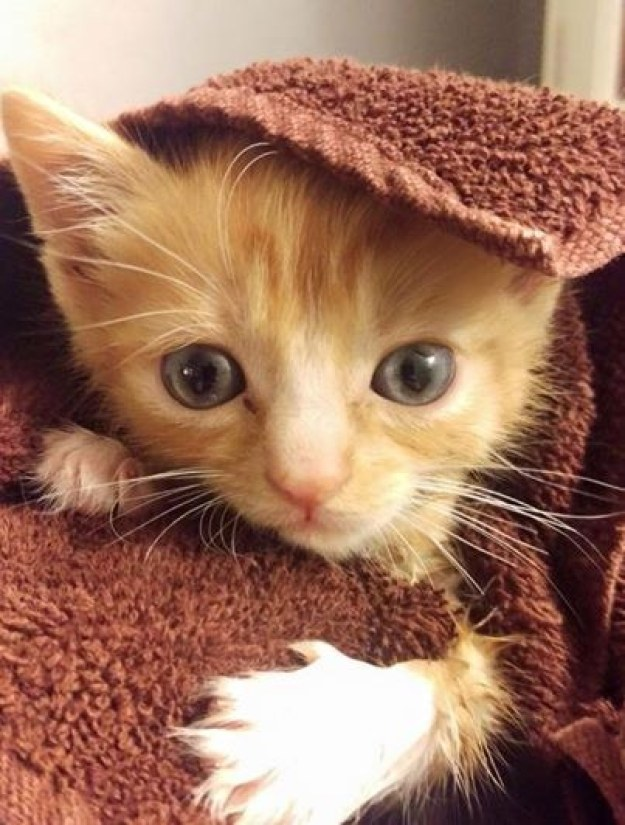 """""""We love this little guy and can't wait to see what the future holds for him,"""" the vet staff wrote on Facebook."""