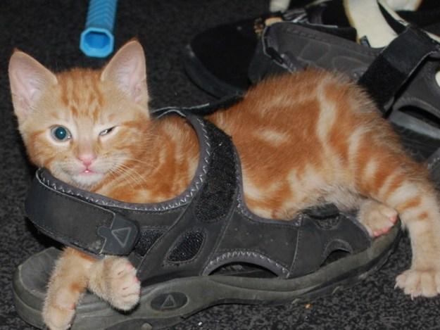 This kitten trying to make a fashun statement.
