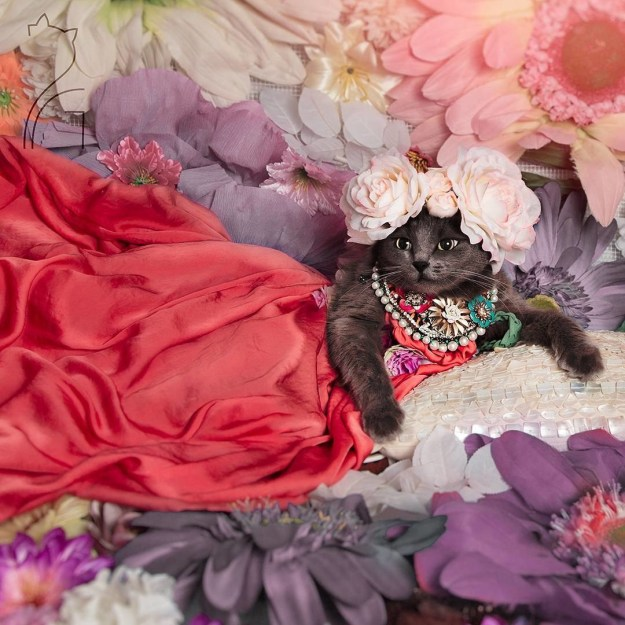 "Pitzush is a self-declared ""fashionista cat"" and she is SLAYING the game."