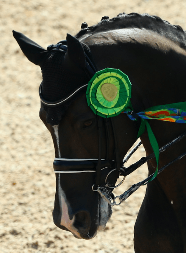 And this horse knows. This horse is clearly sad at the lack of a really good medal. You can't tell me this horse isn't really sad about the fact that he doesn't get a proper medal and instead has to hang out with this nonsense on the side of his head.