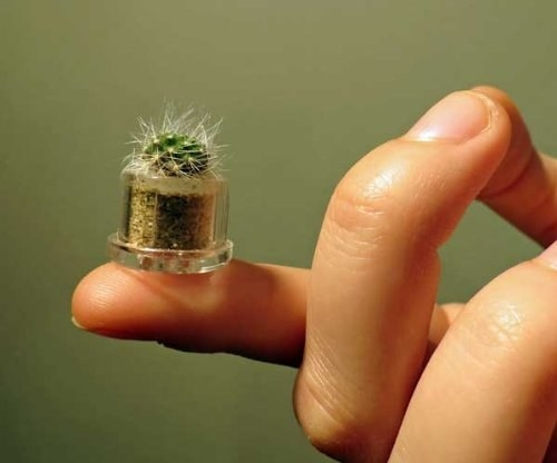 The cutest little cactus you've ever seen.
