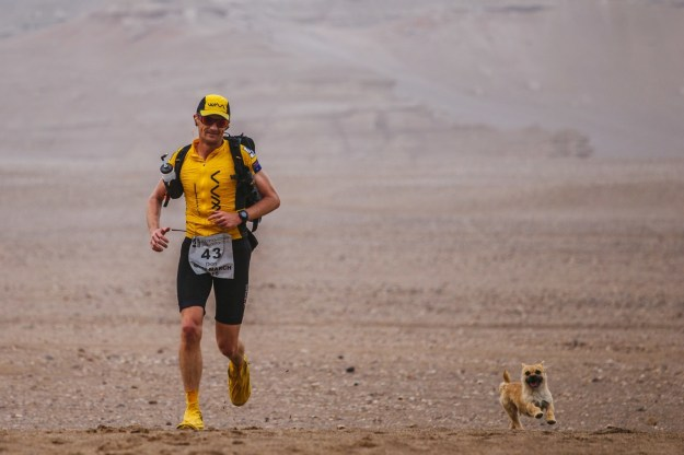 On day two of an intense, six-day marathon across China's longest-spanning desert, professional runner Dion Leonard noticed a tiny dog running alongside him.