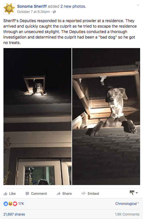 The Sonoma County Sheriff's Department in California recently responded to a report of a prowler at a residence, only to find the culprit trying to crawl out of a skylight on all four paws.