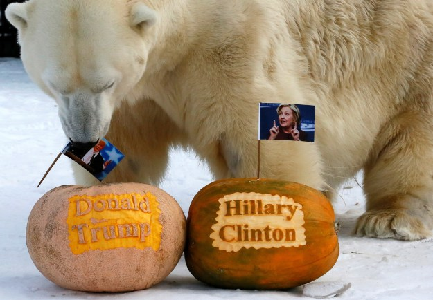 Felix the Polar Bear: Donald Trump Wins!