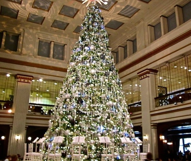 Christmas Trees In America