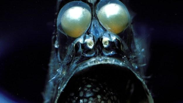 Some deep-sea creatures mimic human facial features.