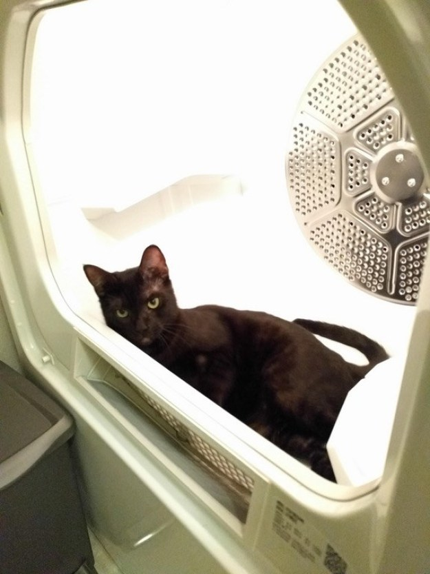 """This lazy cat who's like, """"Today is MY laundry day, fuck off."""""""