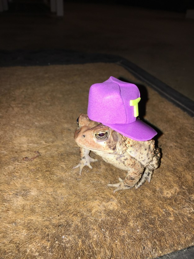 Newsome told BuzzFeed News he started making the hats to cheer up a friend's son who had lost his own pet toad