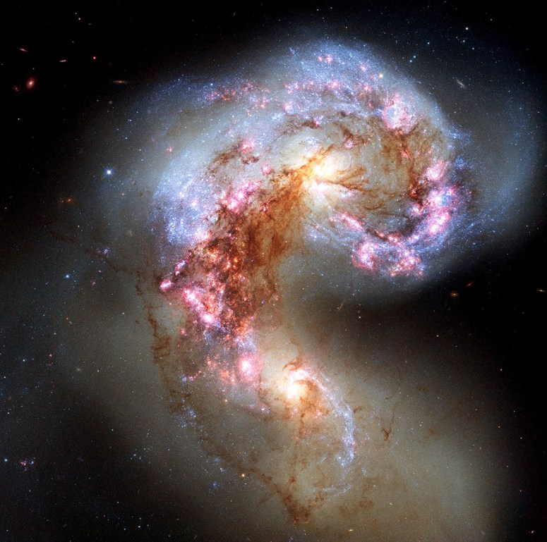 The Antennae galaxies — also known as NGC 4038 and NGC 4039 — are locked in a deadly embrace. Once normal, sedate spiral galaxies like the Milky Way, the pair have spent the past few hundred million years sparring with each other. This clash is so violent that stars have been ripped from their host galaxies to form a streaming arc between the two. The rate of star formation is so high that the Antennae galaxies are said to be in a state of starburst, a period in which all of the gas within the galaxies is being used to form stars. This cannot last forever and neither can the separate galaxies; eventually the nuclei will coalesce, and the galaxies will begin their retirement together as one large elliptical galaxy.
