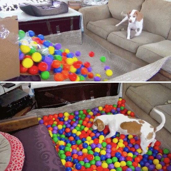 This owner who created a ball pit at home for their dog: