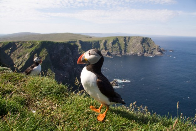 LOOK AT PUFFINS BECAUSE THEY ARE SO CUTE OMG!