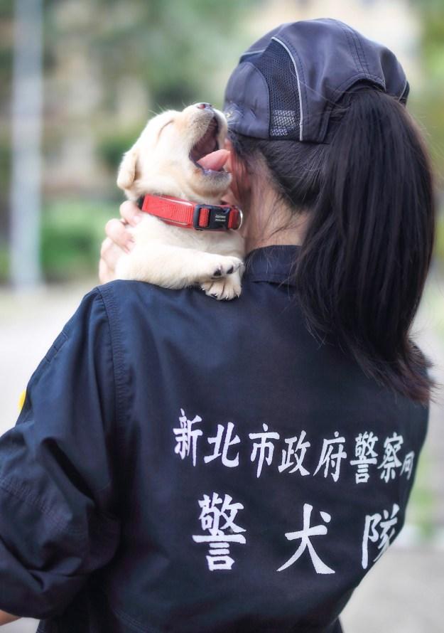 警察犬チームのリーダー、パン・ティアン=ロンは、子犬たちはこれからどんどんトレーニングを積み、彼らの両親と同じく立派な警察犬へとなるのだとBuzzFeedに語ってくれた。なんと、子犬たちのお母さんお父さんも警察犬なのか!