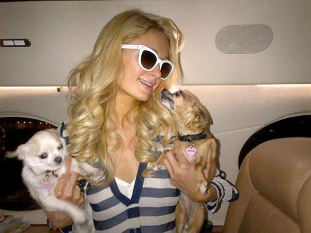 Paris Hilton and her dogs, inhaling that fresh G7 air.