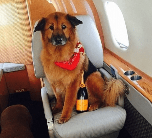Chelsea Handler's dog Chunk, sitting pretty inside of his private jet, about to pop open a bottle of bubbly.