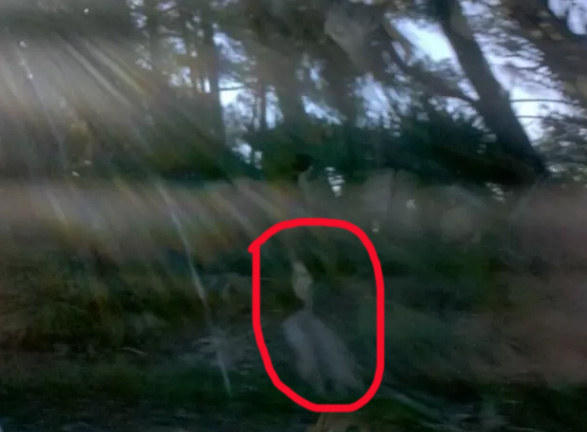 """""""This photo was taken in the marsh on Fripp Island, South Carolina, out the car window. I was freaked out by the very clear image of a dark-haired woman, so I showed it to a cashier when we stopped at a local café. She said she's seen many images like this, because Fripp Island is very haunted.""""—kristenc4"""