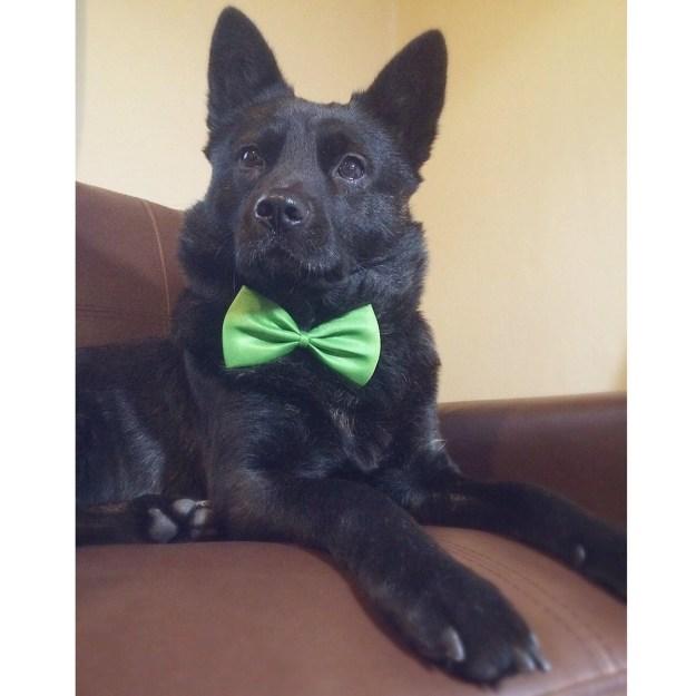 「しかし、うちの甲斐犬は、鼻が短く目もタレ目で甲斐犬の精悍さがまったくない顔に成長しました。家族にとってはそれが愛おしいポイントです」と話します。