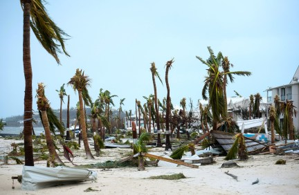 Broken palm trees on the beach of the Hotel Mercure.
