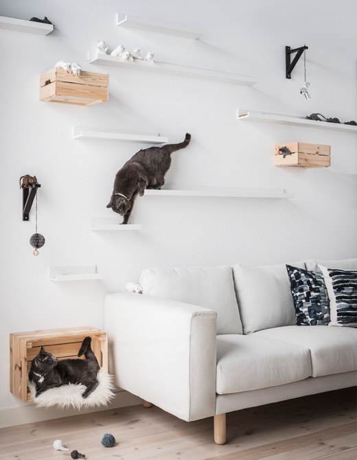 This cat climbing wall.